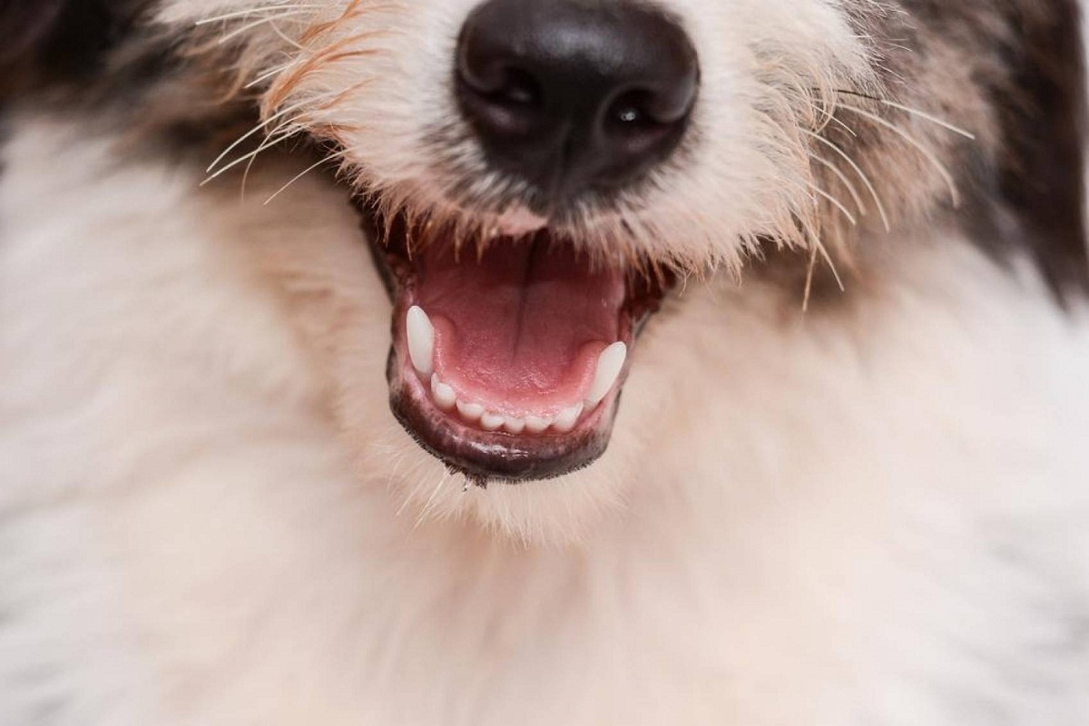 Los bigotes son esenciales para que el perro se oriente
