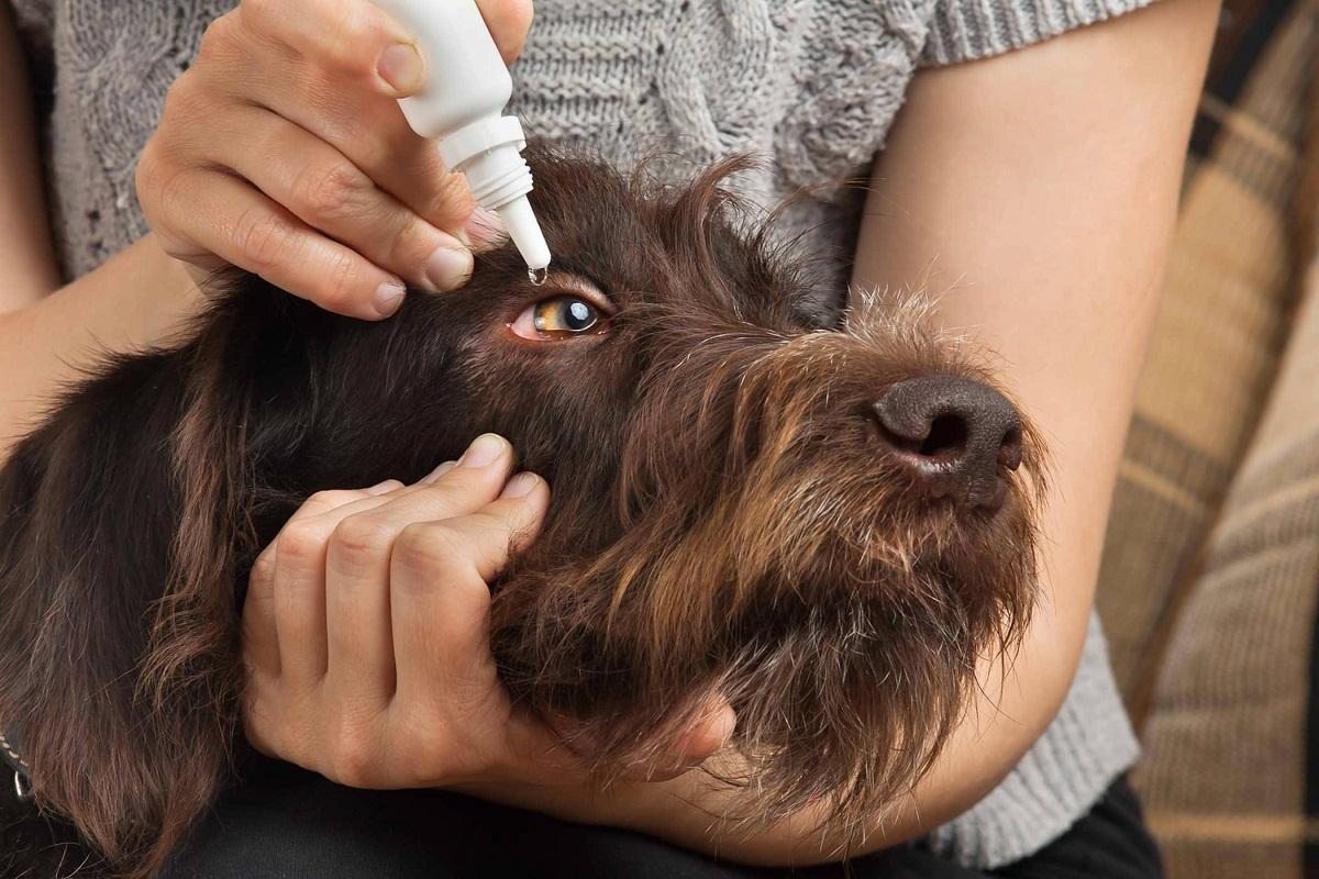 Lleva a tu perro al veterinario si tiene conjuntivitis