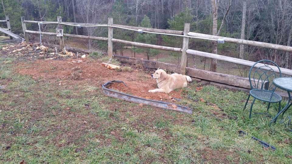 Solo un cachorro de tres patas llora en la tumba de su amigo