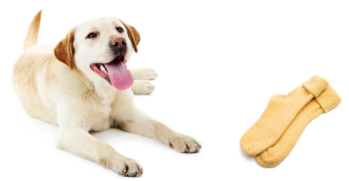 No dejes que tu perro juegue con medias