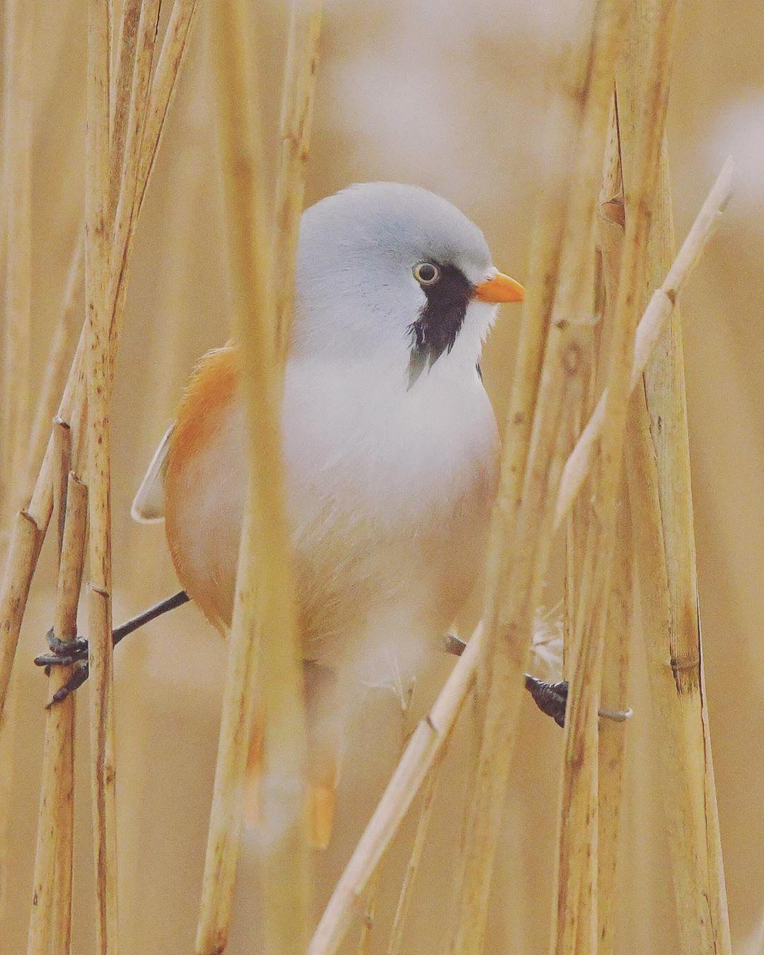 lindos pájaros que abren sus piernas en las ramas