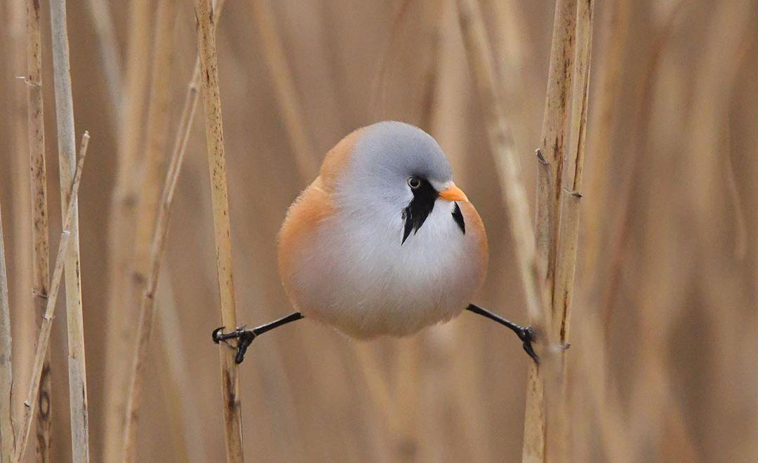 pájaros que tienen una forma curiosa de quedarse en las ramas