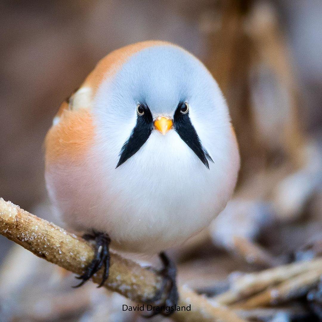 los pájaros pueden