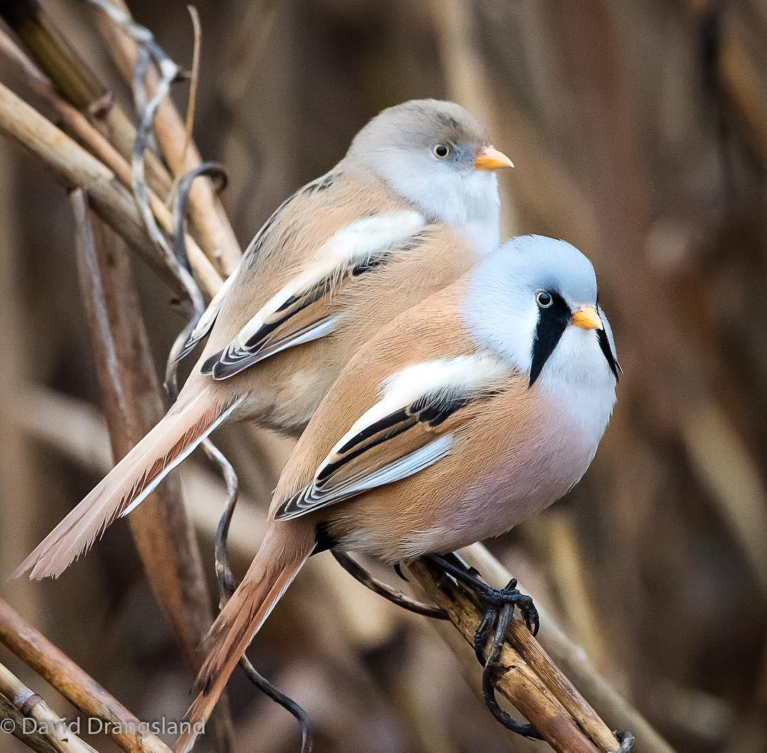 Estas aves pueden