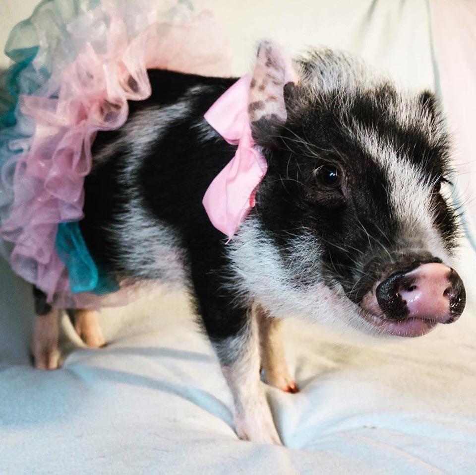 Piggy con accesorios rosas