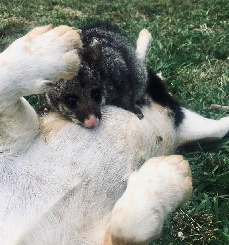 Cachorro con su bebé adoptado