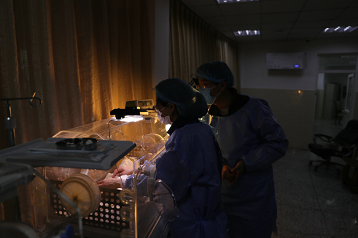 Panda gemelos en la incubadora