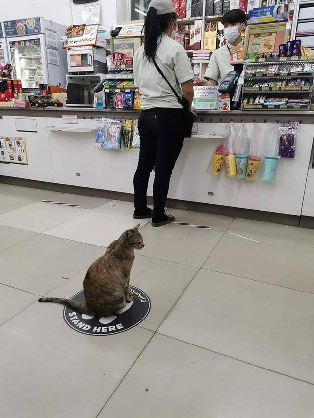 Cat mantiene distancia en un almacén