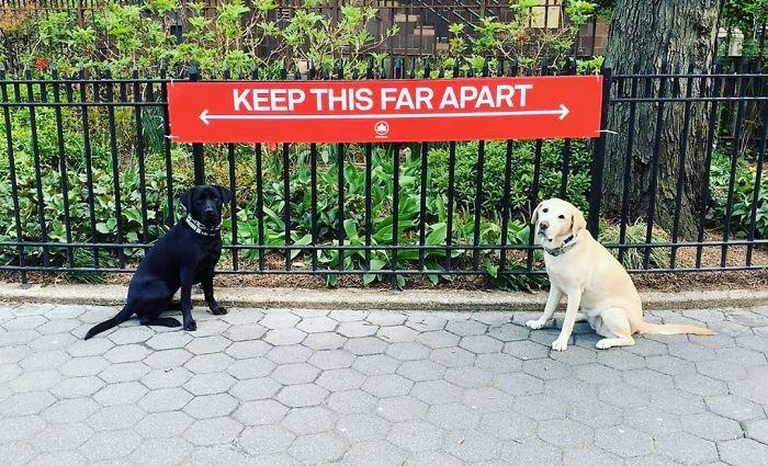 distancia que toman entre dos cachorros debido a la pandemia
