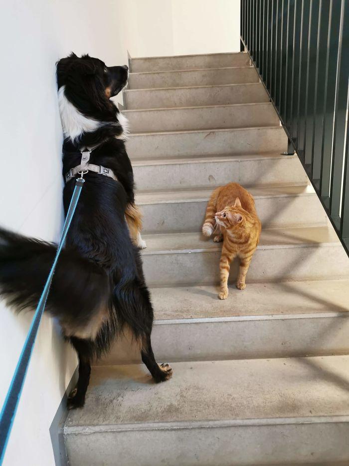 distancia social animal
