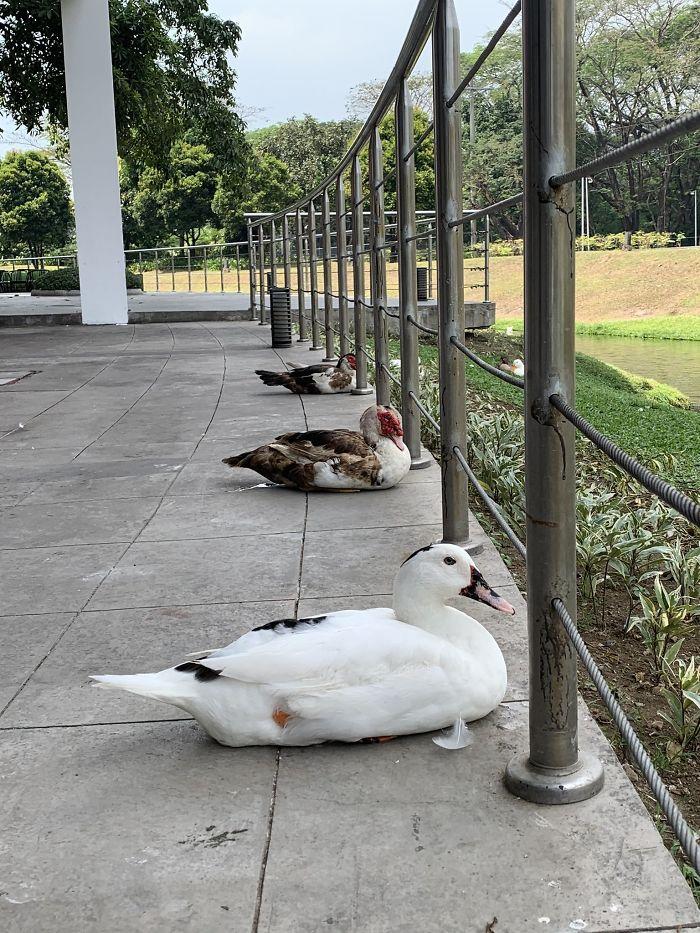 los animales mantienen distancia social