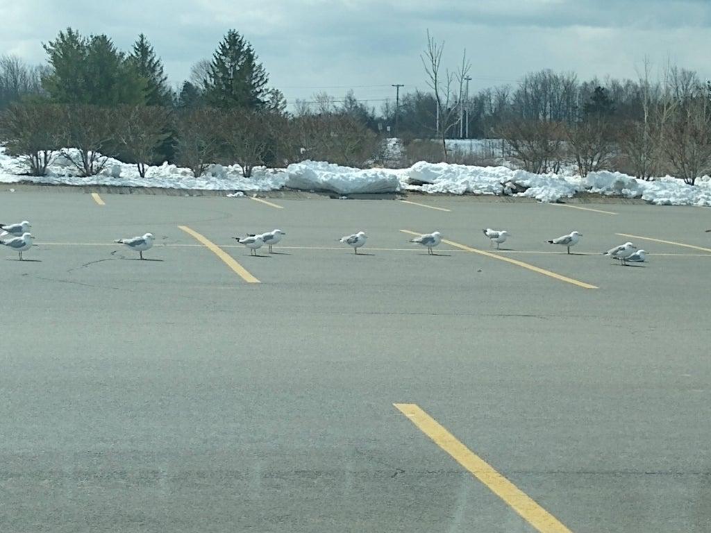 Aves separadas en un estacionamiento