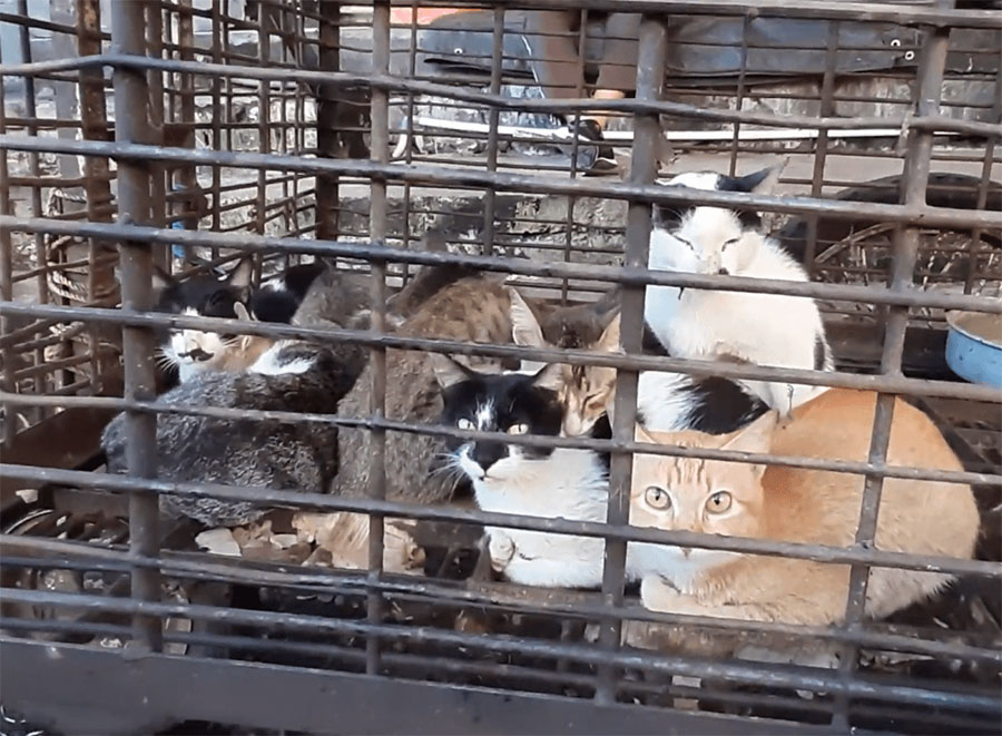 Gatos vendidos