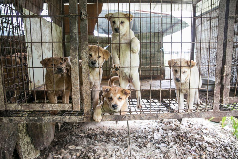 Segunda ciudad prohíbe el consumo de perros