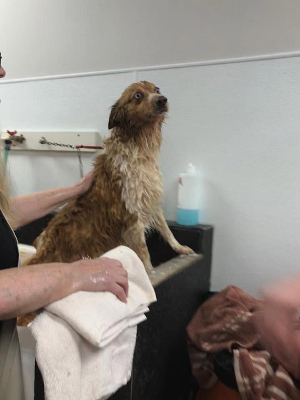 Perrito se baña
