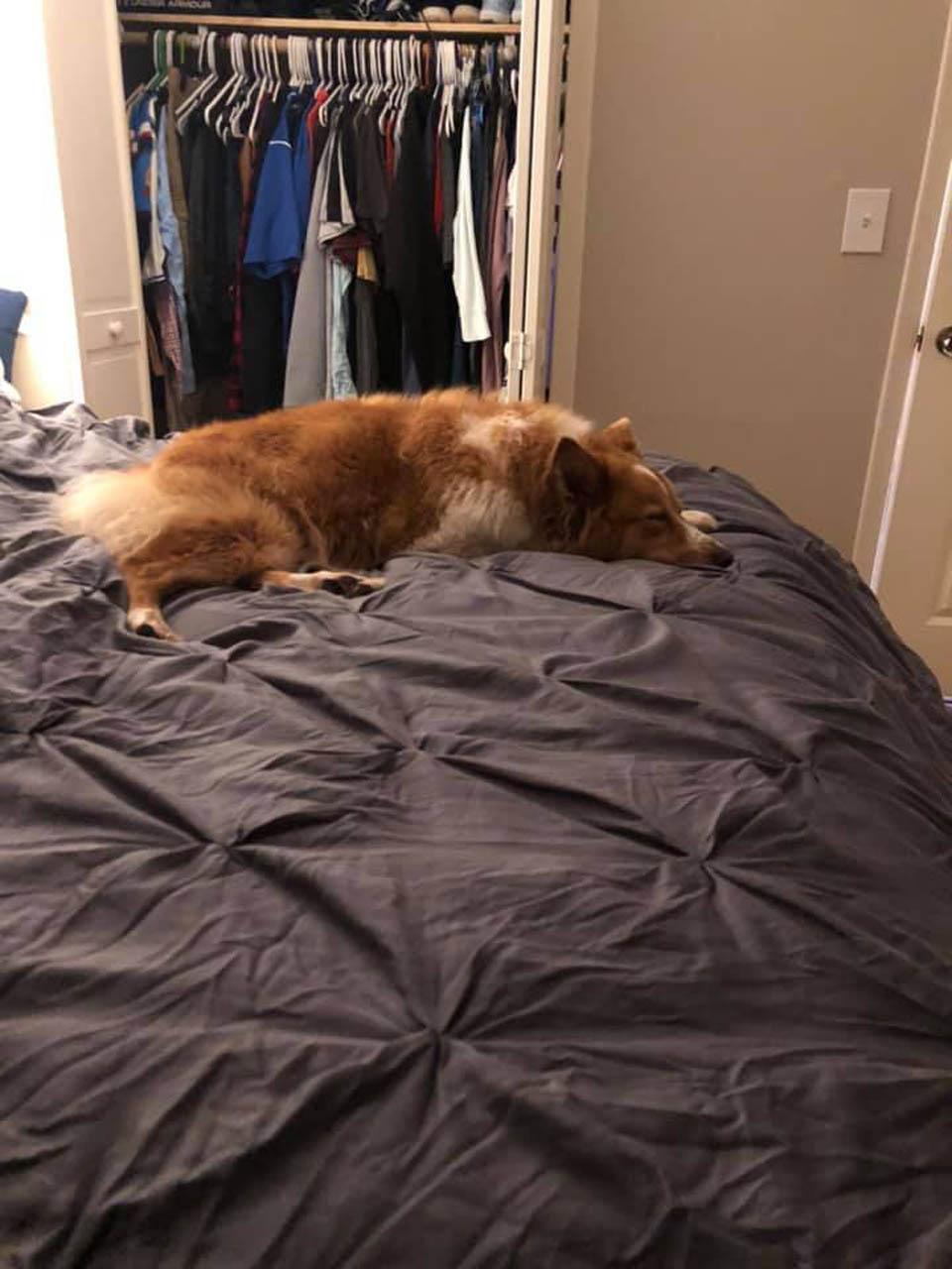 Puppy descansa en casa otra vez