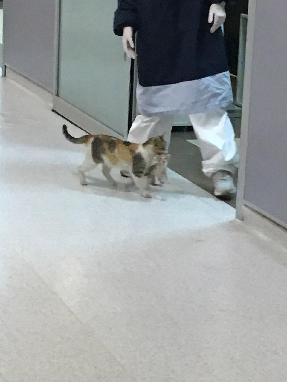 Cat llega al hospital