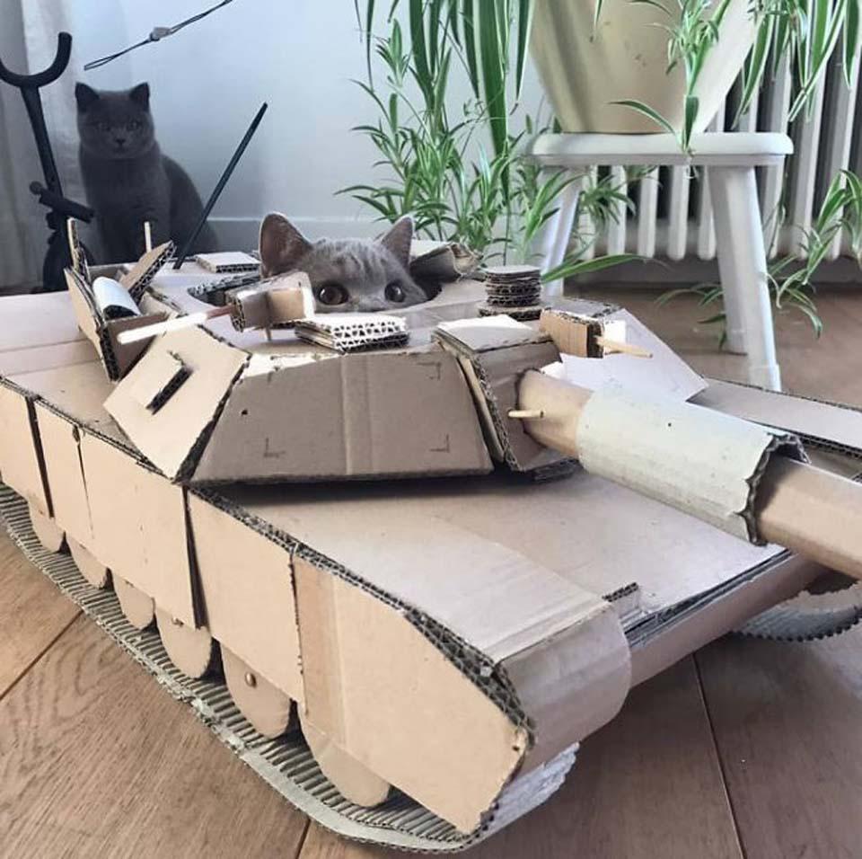 Gato juega en tanque de cartón