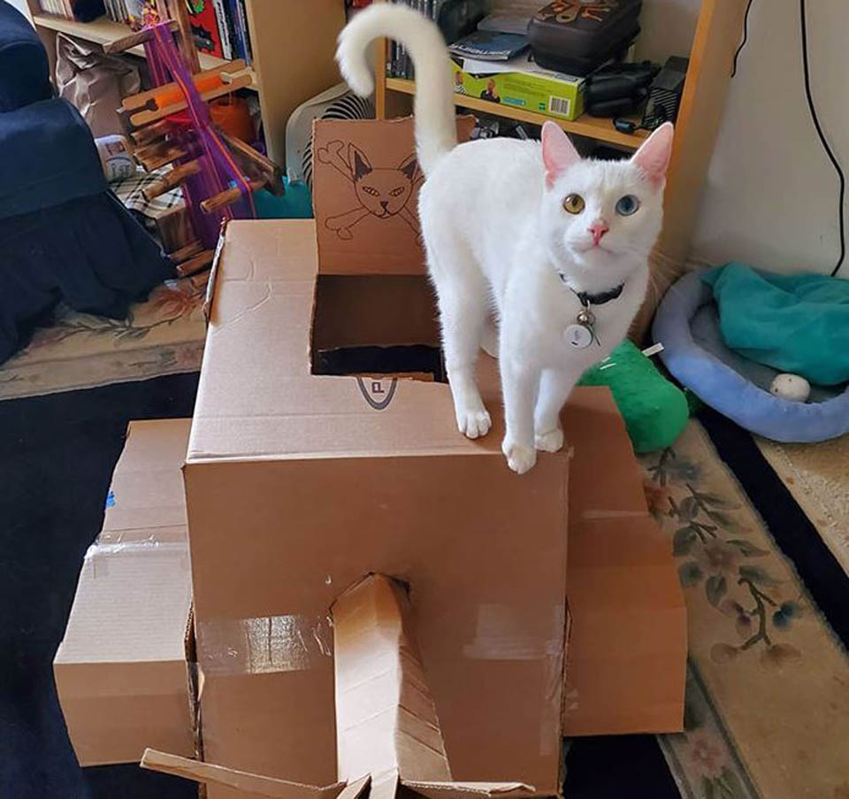 Gato blanco en tanque de cartón