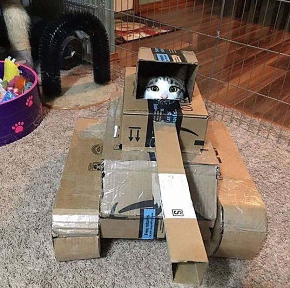Kitty en cajas muy creativas