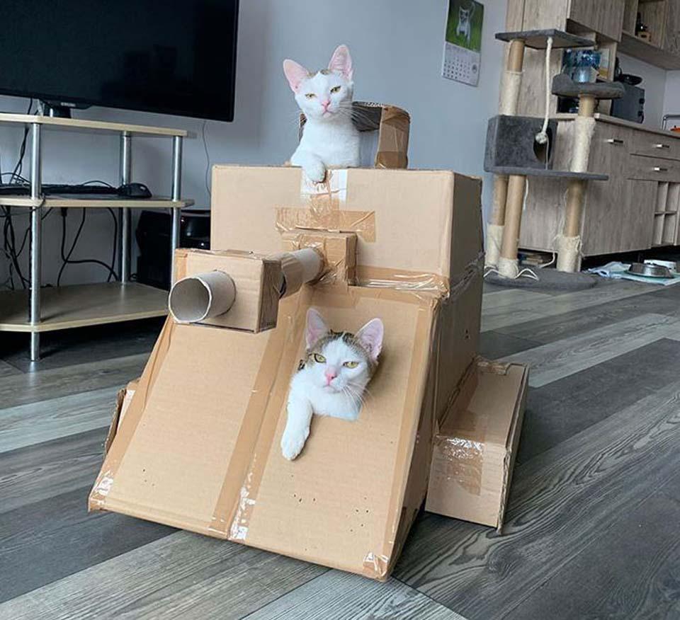 A dos gatos les gusta el tanque de cartón