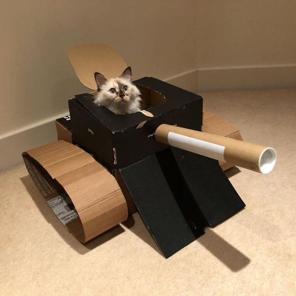 Al gatito le gusta su nueva caja de cartón