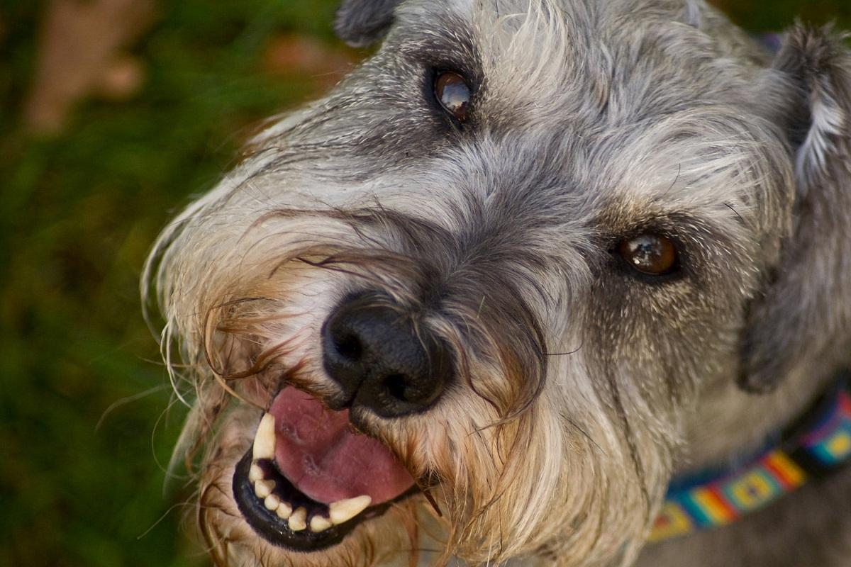 Los ojos de perro son muy delicados.