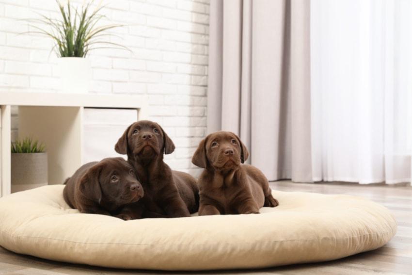 cama irrompible para perros