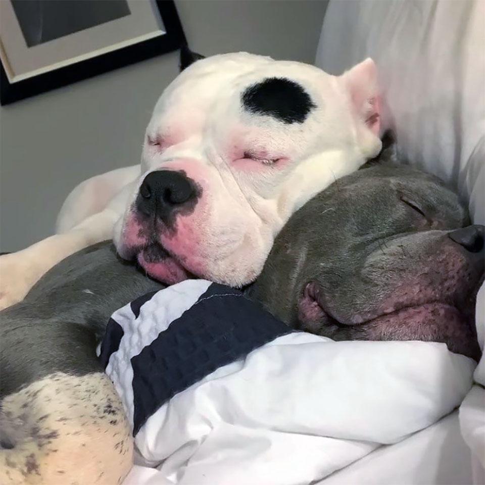 La pequeña P duerme con Tonka