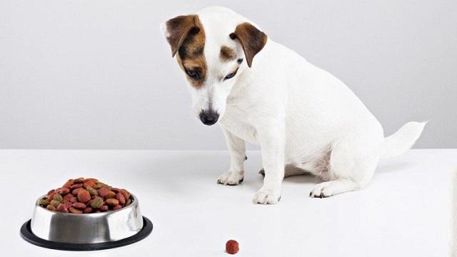 Deja la comida para perros en el plato
