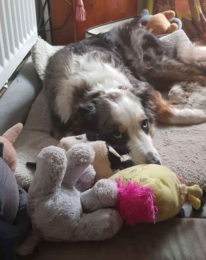 perro al lado de sus juguetes favoritos