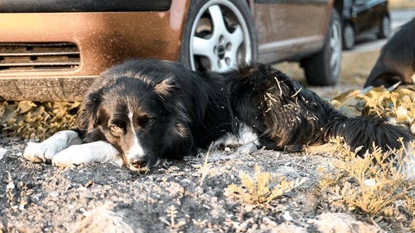 coche de transporte para perros