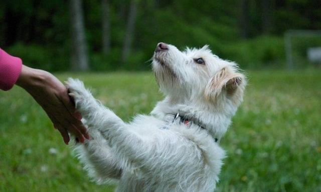 Evita que tu perro se suba sobre ti