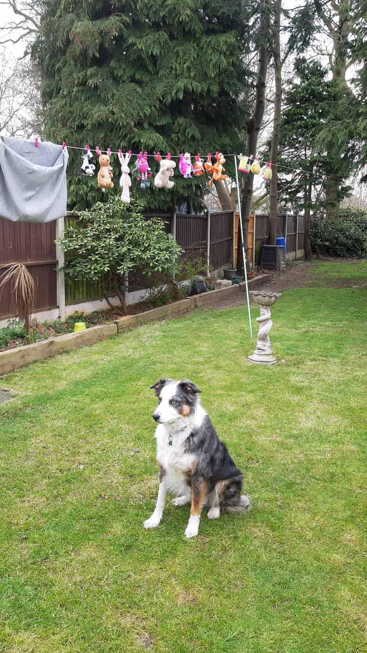 el perro mira sus juguetes mientras se secan