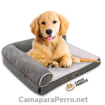 Cama ideal para el Retriever Golden