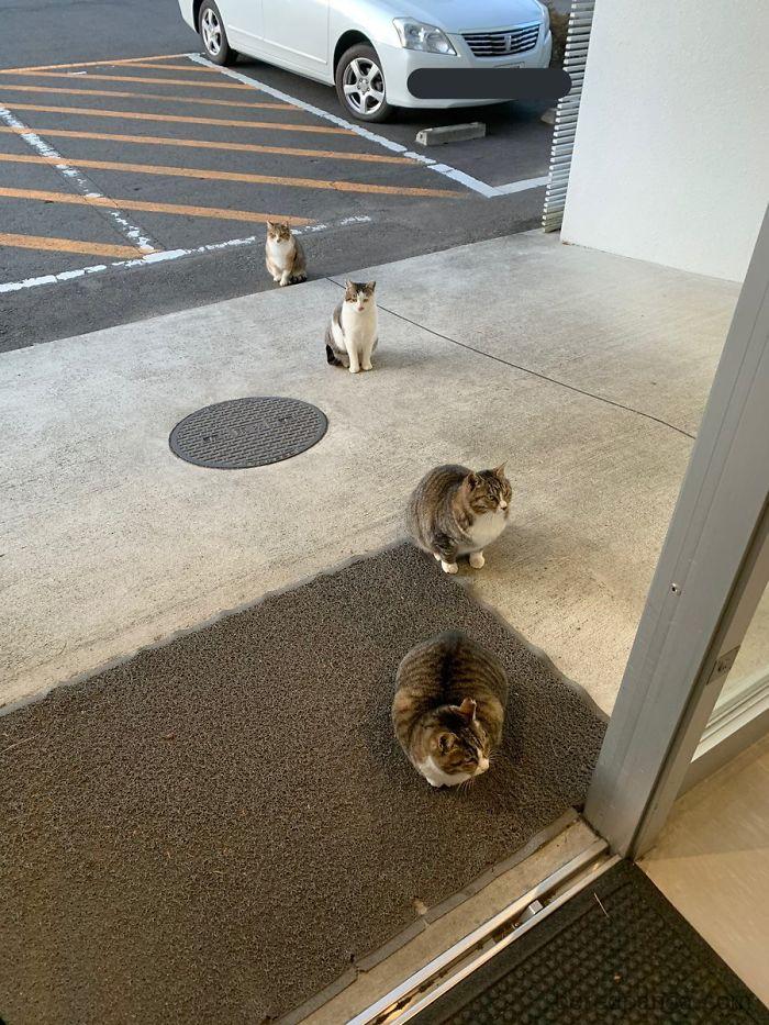 Ejemplo de distancia social dada por animales.