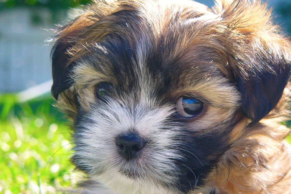 Si su perro tiene pupilas dilatadas, puede necesitar ayuda